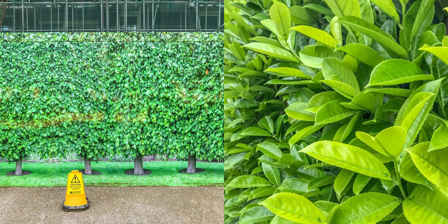 Green development board vs real leafy green bush